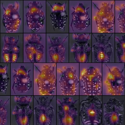 Images of bugs that have been identified by an AI.